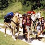 Ferienfeizeit Wanderung mit Packpferden